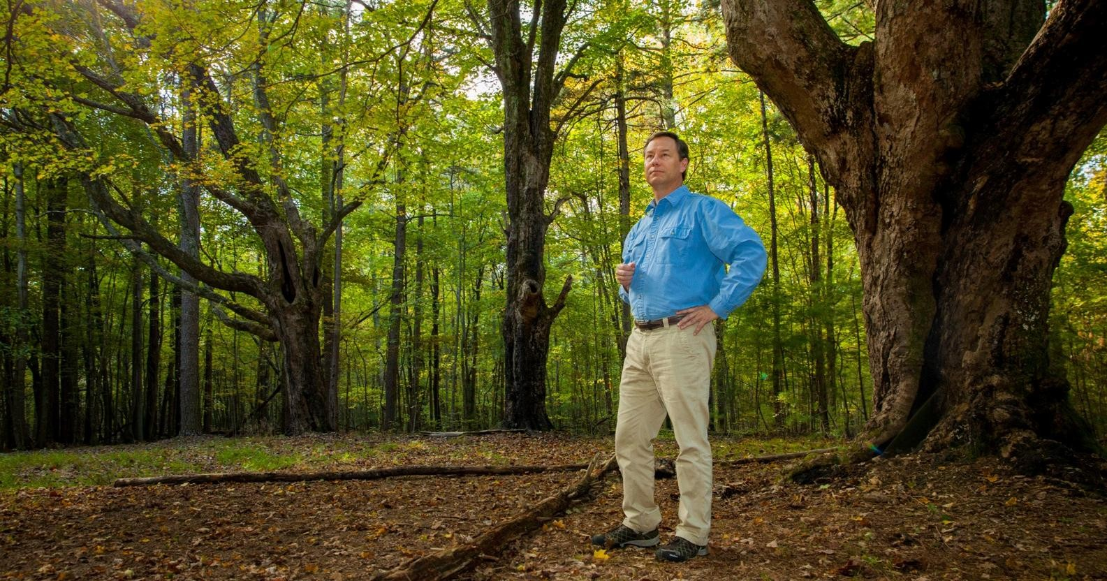 History Professor John Willis stands beneath the three towering sugar maples that likely shaded the farmhouse at King's Farm. Photo by Buck Butler